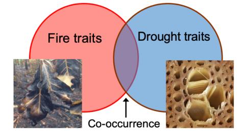 Drought-fire_traits