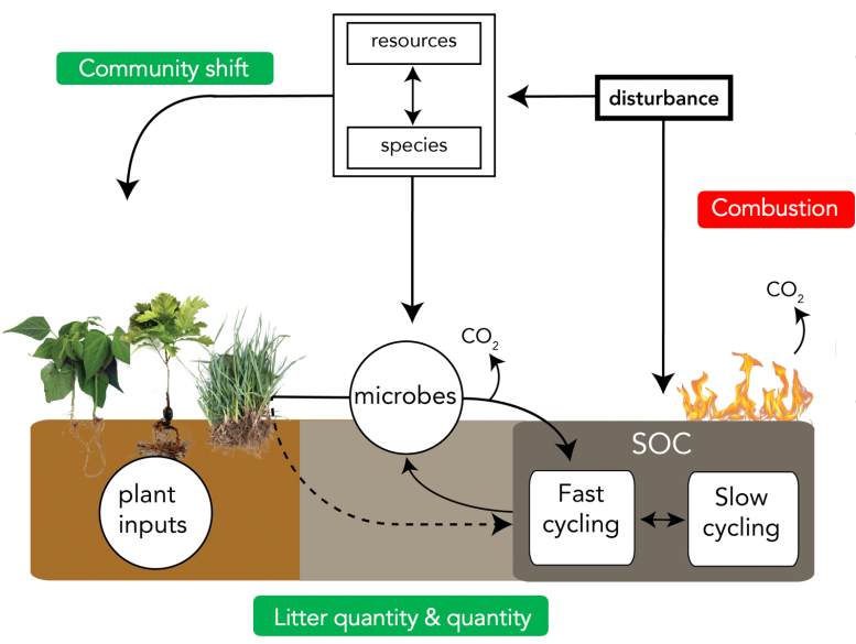 response_effect_traits_and_soil_carbon